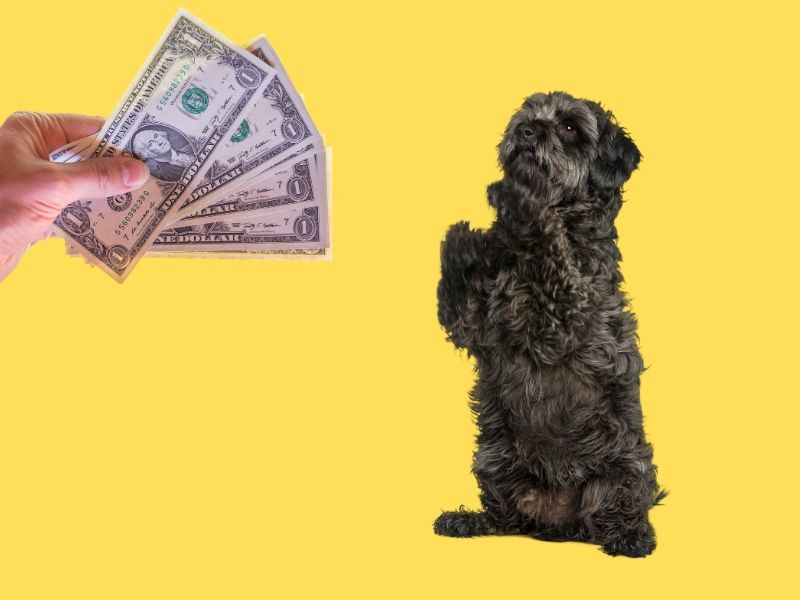 picture of a hand holding money and a dog begging